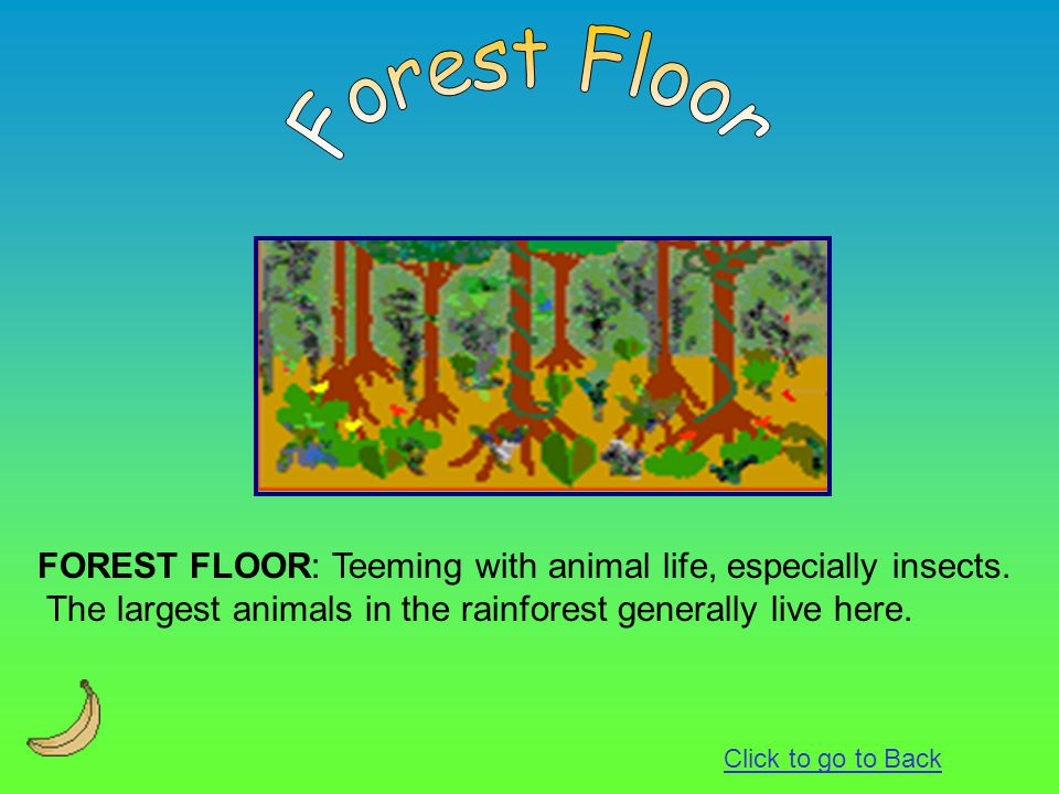 Forest Floor FOREST FLOOR: Teeming with animal life, especially insects. The largest animals in the rainforest generally live here.