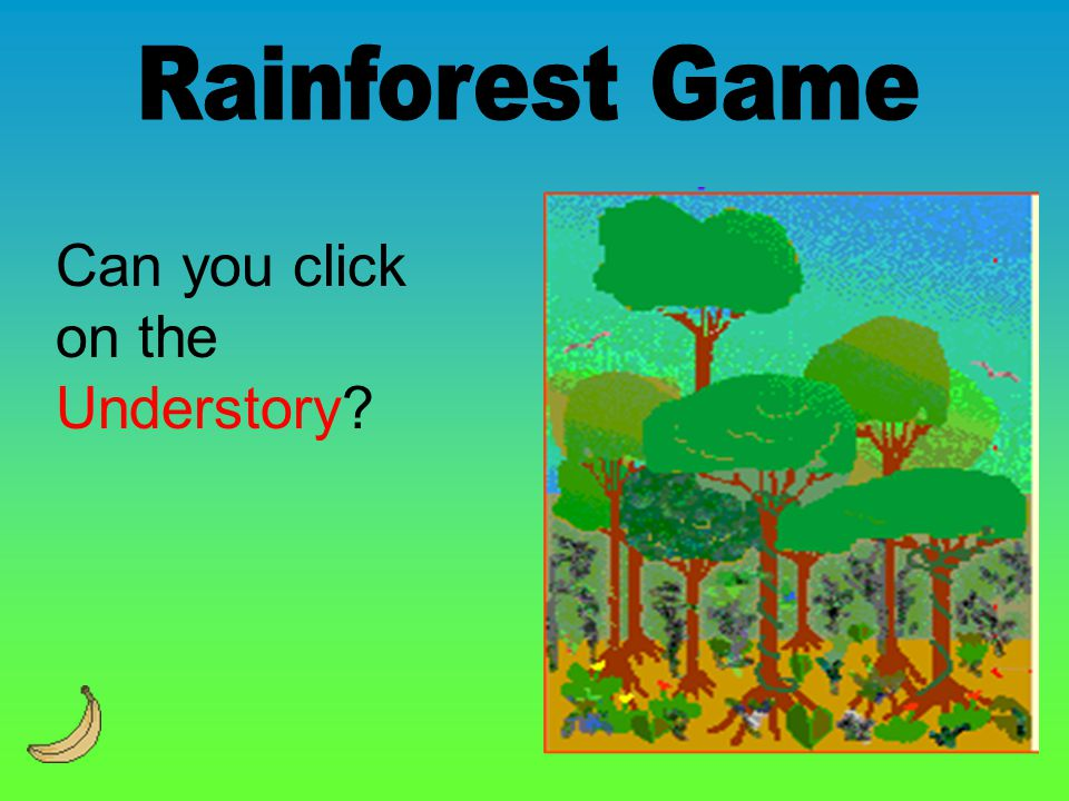 Rainforest Game Can you click on the Understory