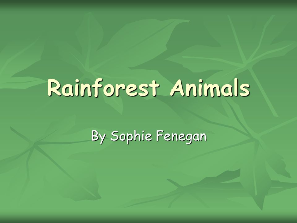 Rainforest Animals By Sophie Fenegan