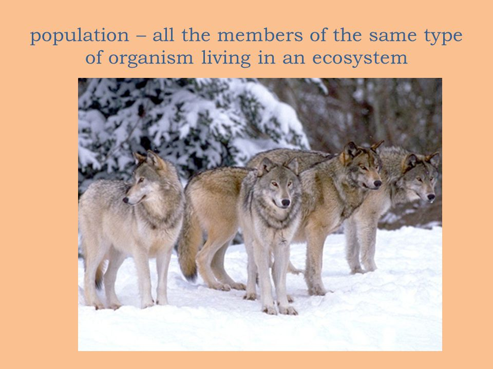 population – all the members of the same type of organism living in an ecosystem