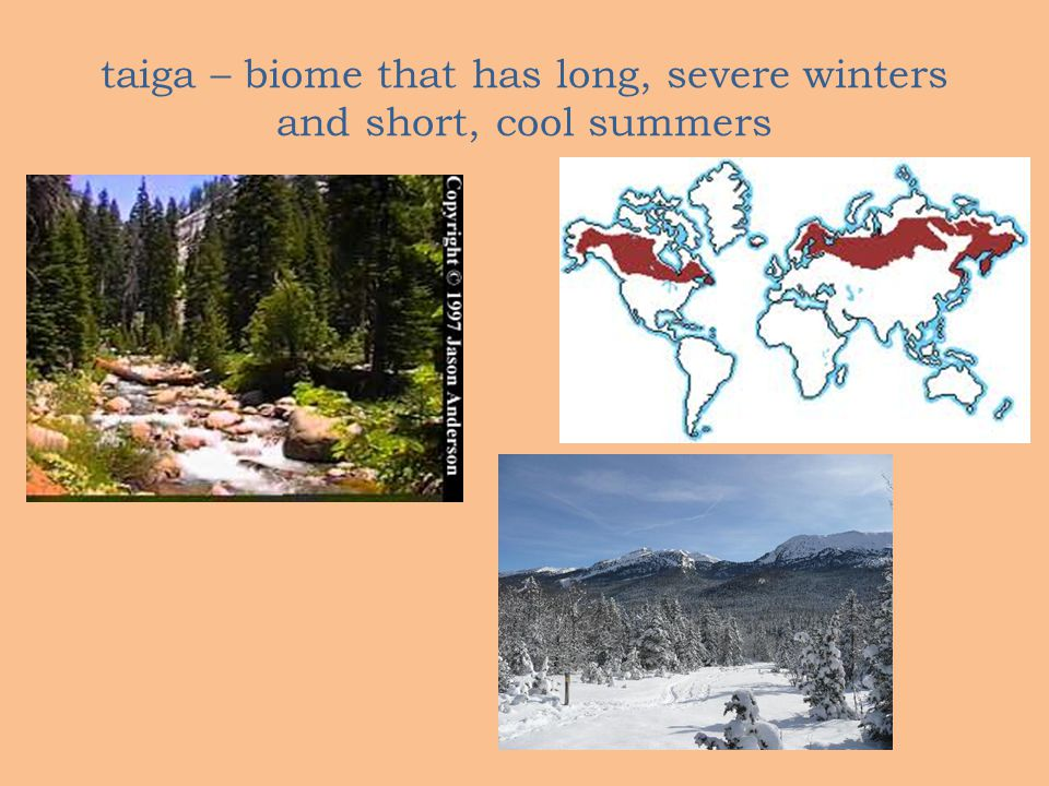 taiga – biome that has long, severe winters and short, cool summers