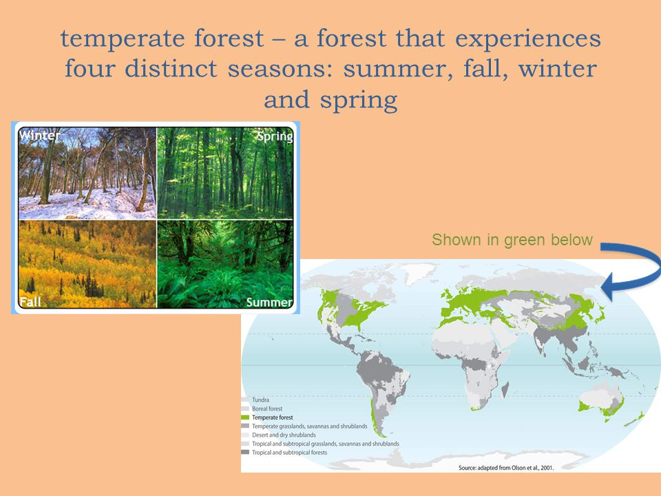 temperate forest – a forest that experiences four distinct seasons: summer, fall, winter and spring