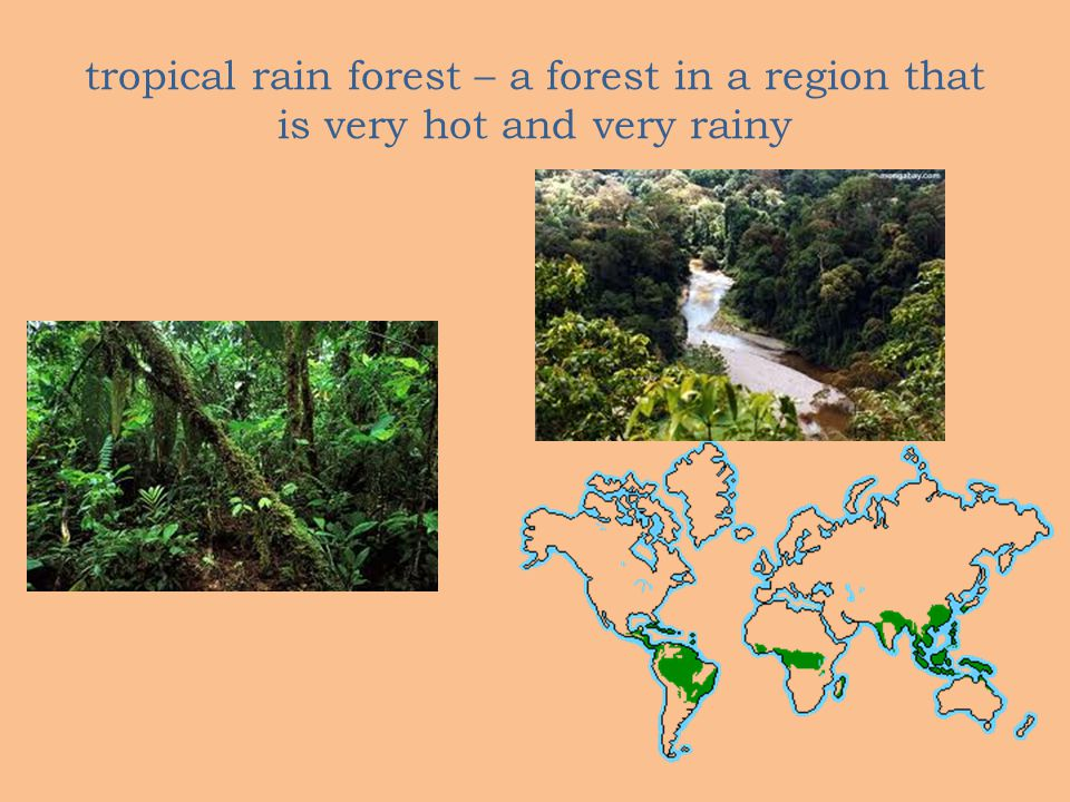 tropical rain forest – a forest in a region that is very hot and very rainy