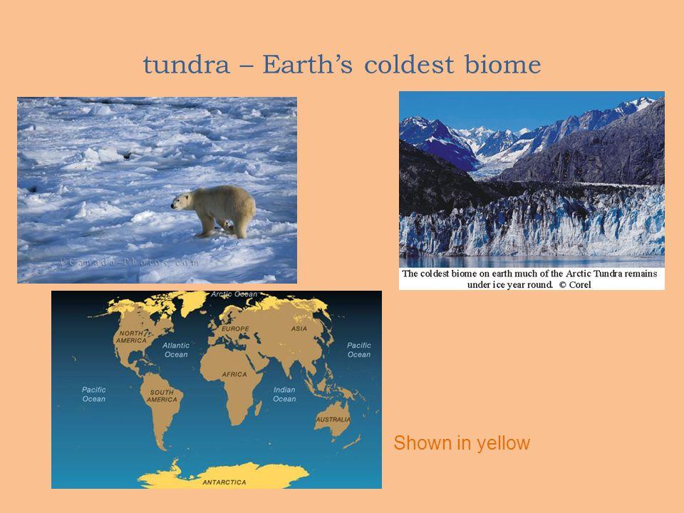 tundra – Earth's coldest biome