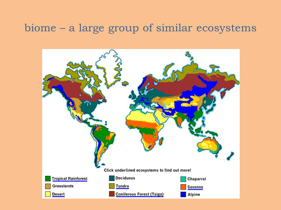biome – a large group of similar ecosystems