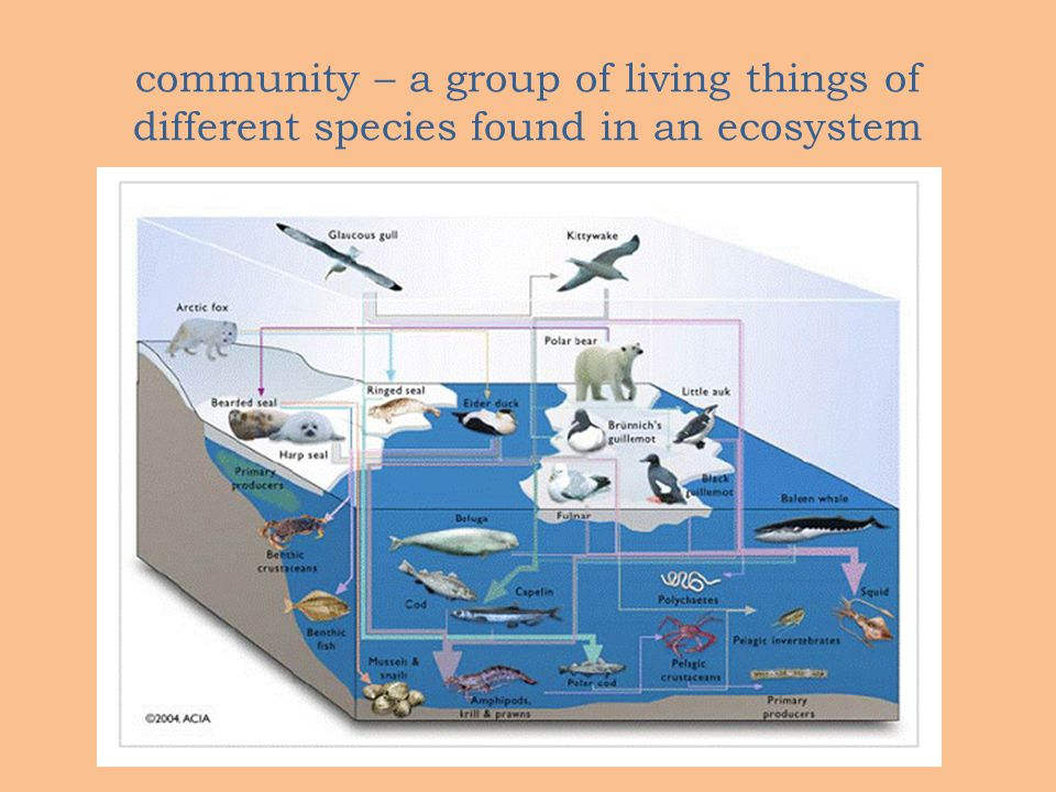 community – a group of living things of different species found in an ecosystem