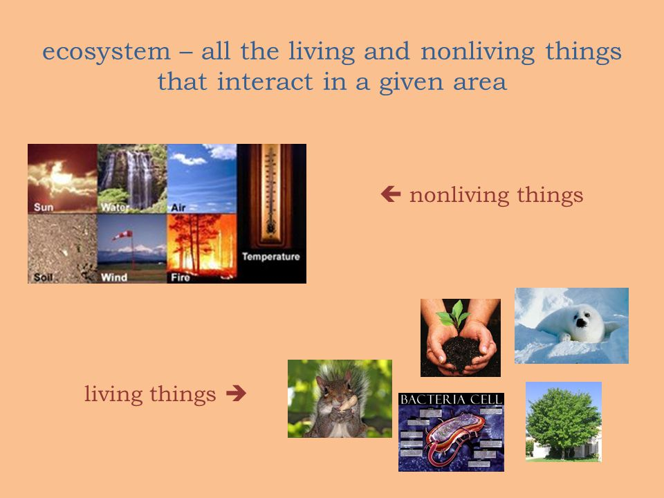 ecosystem – all the living and nonliving things that interact in a given area