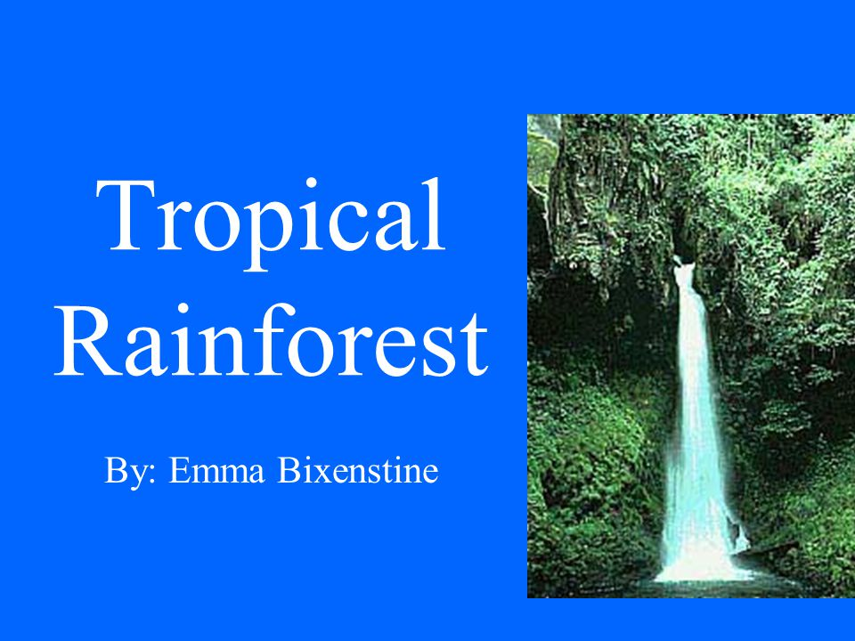 Tropical Rainforest By: Emma Bixenstine