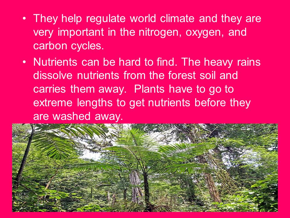 They help regulate world climate and they are very important in the nitrogen, oxygen, and carbon cycles.