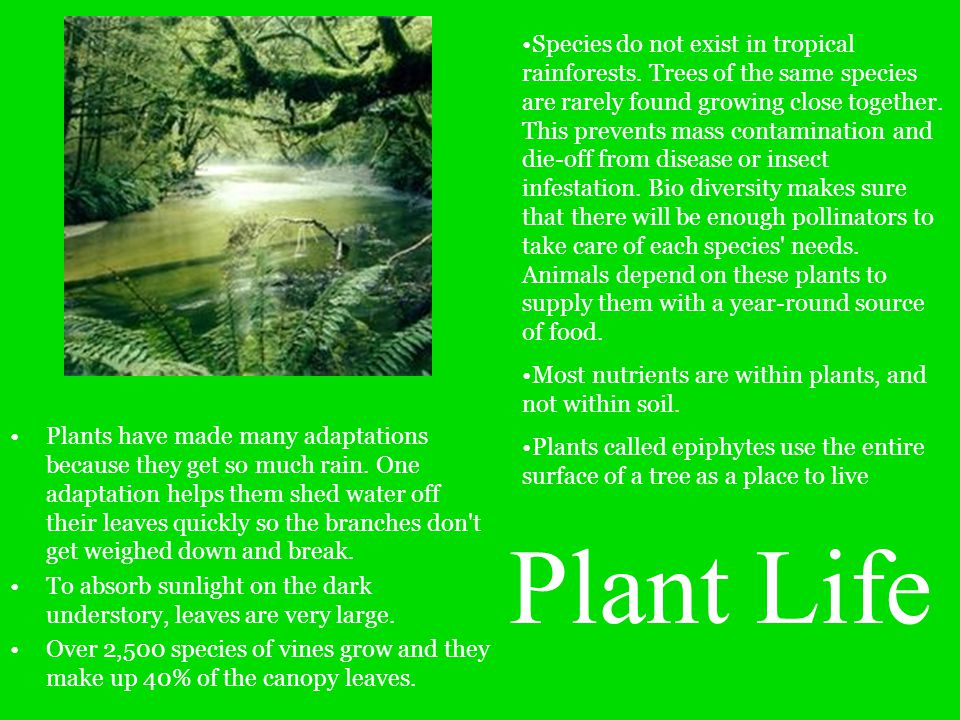 Species do not exist in tropical rainforests