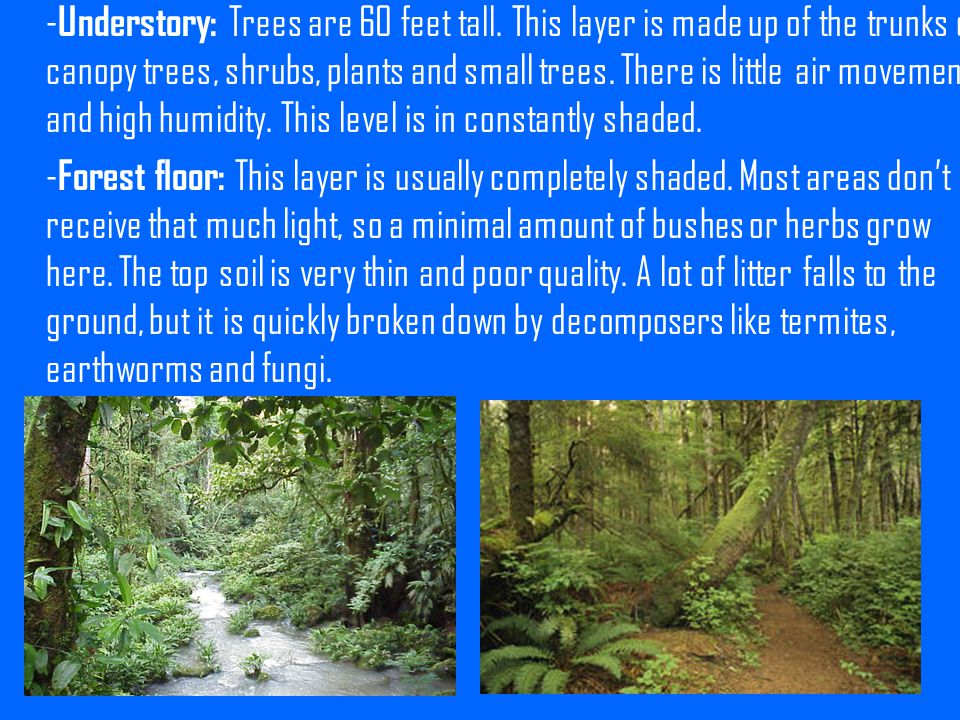 -Understory: Trees are 60 feet tall