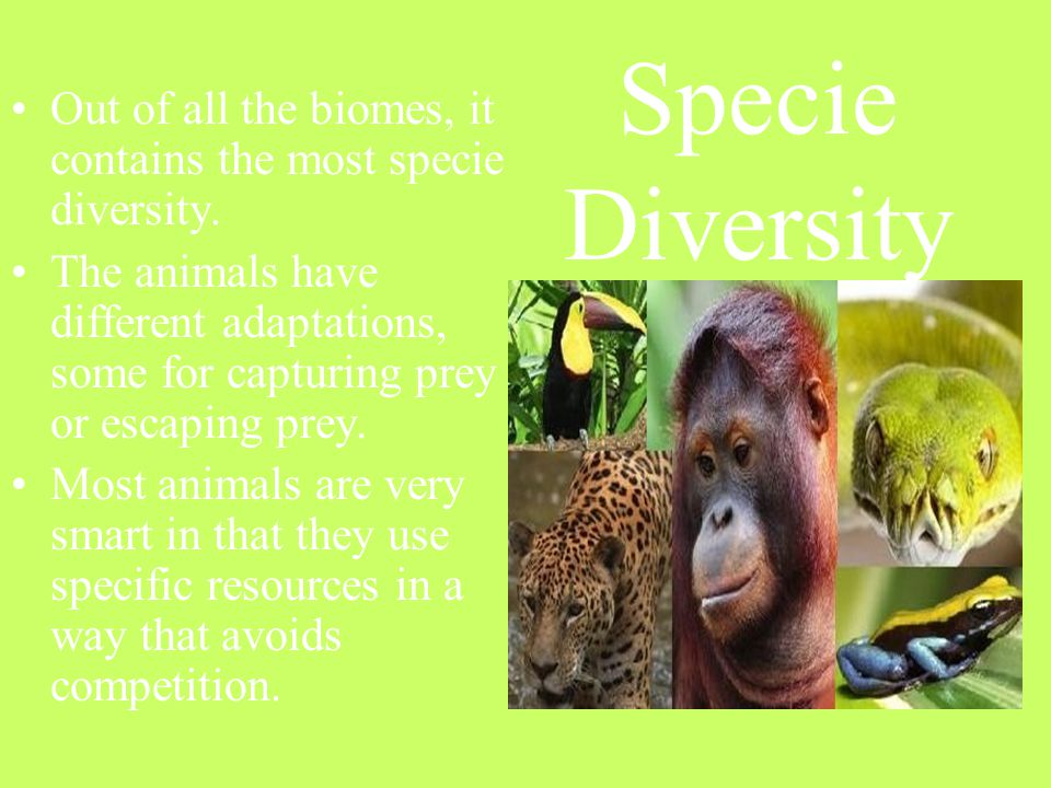 Specie Diversity Out of all the biomes, it contains the most specie diversity.