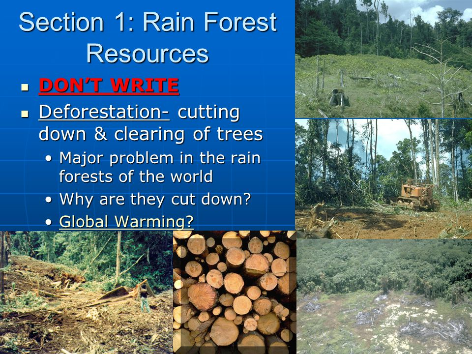 Section 1: Rain Forest Resources