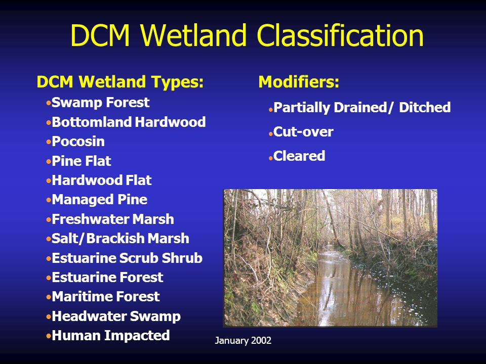 DCM Wetland Classification