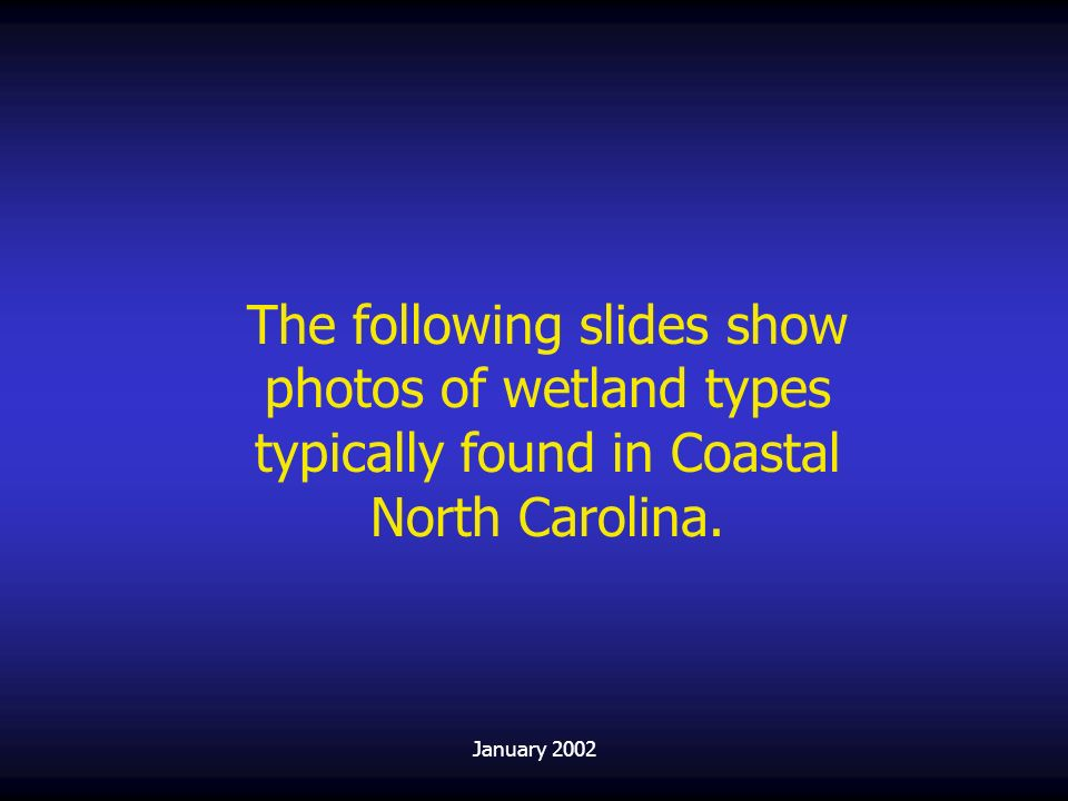 The following slides show photos of wetland types typically found in Coastal North Carolina.