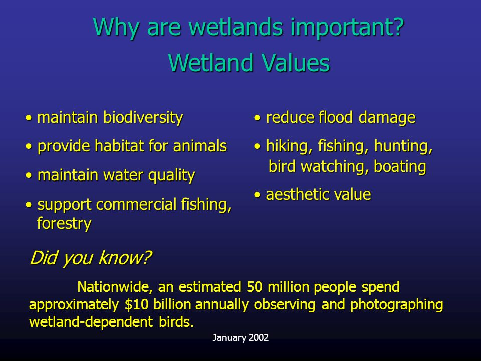 Why are wetlands important