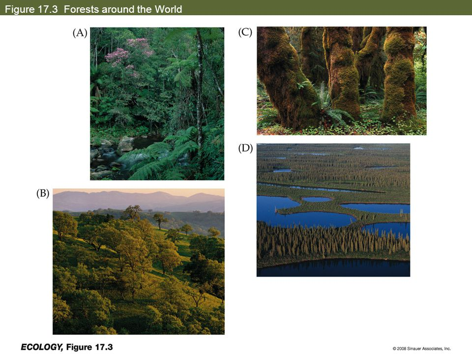 Figure 17.3 Forests around the World