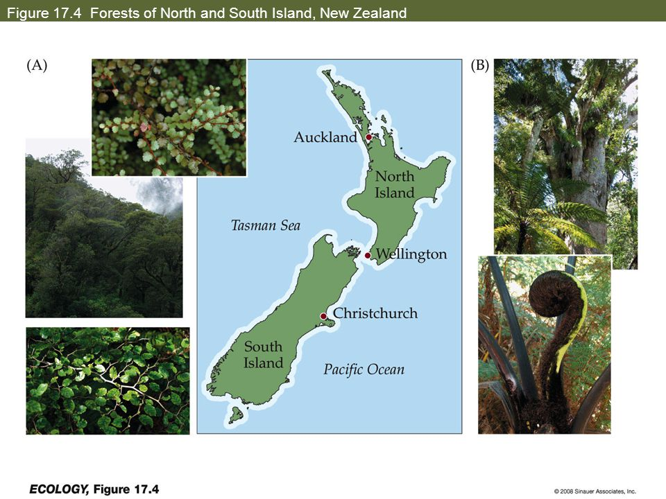 Figure 17.4 Forests of North and South Island, New Zealand