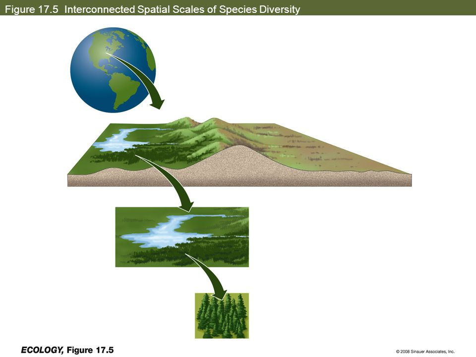 Figure 17.5 Interconnected Spatial Scales of Species Diversity