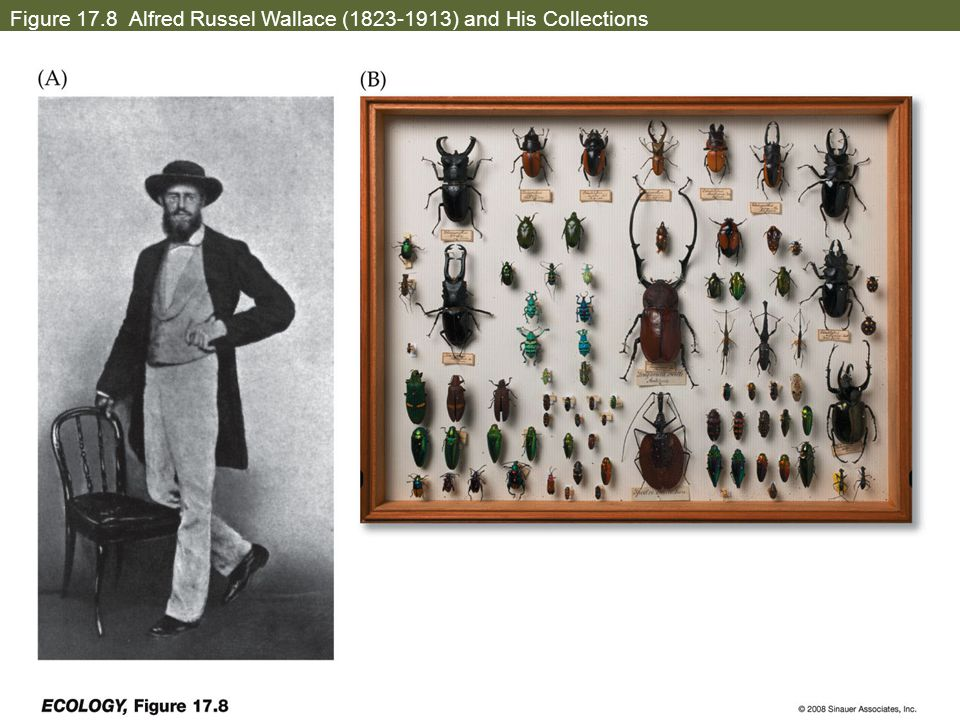 Figure 17.8 Alfred Russel Wallace (1823-1913) and His Collections