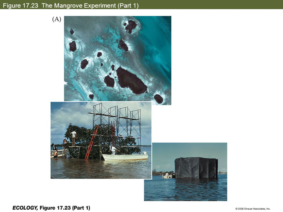 Figure 17.23 The Mangrove Experiment (Part 1)