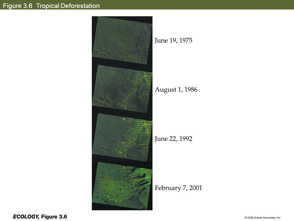 tropical rainforest deforestation case study Eco - cs8 - tropical rainforest - ace geography a case study of one ecosystem: processes, benefits for people, impact of human activity and management.