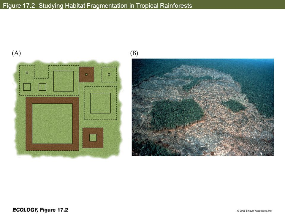 Figure 17.2 Studying Habitat Fragmentation in Tropical Rainforests