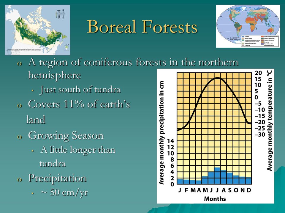 Boreal Forests A region of coniferous forests in the northern hemisphere. Just south of tundra. Covers 11% of earth's.
