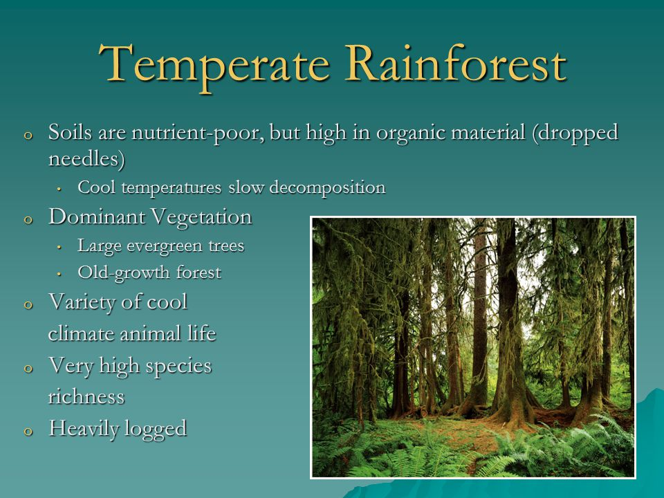Temperate Rainforest Soils are nutrient-poor, but high in organic material (dropped needles) Cool temperatures slow decomposition.