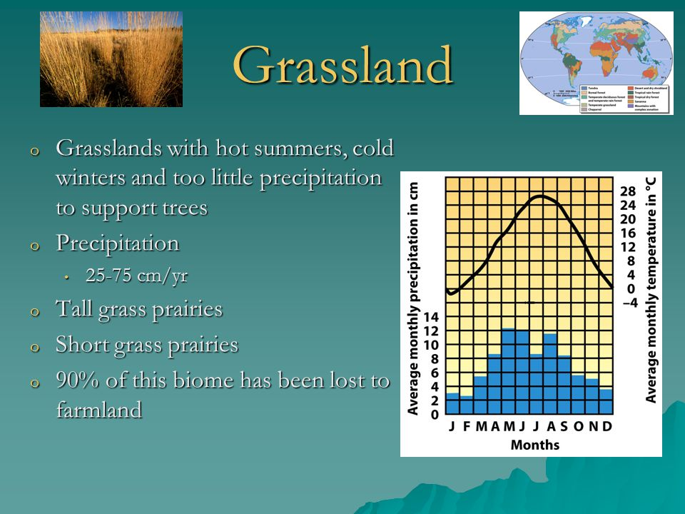 Grassland Grasslands with hot summers, cold winters and too little precipitation to support trees. Precipitation.