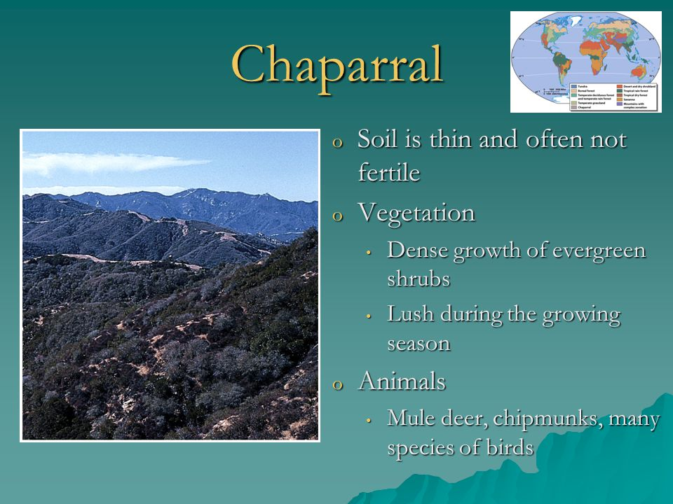 Chaparral Soil is thin and often not fertile Vegetation Animals