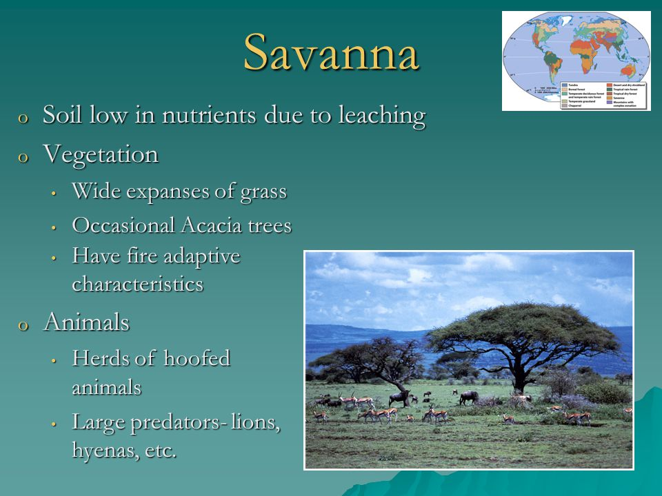 Savanna Soil low in nutrients due to leaching Vegetation Animals