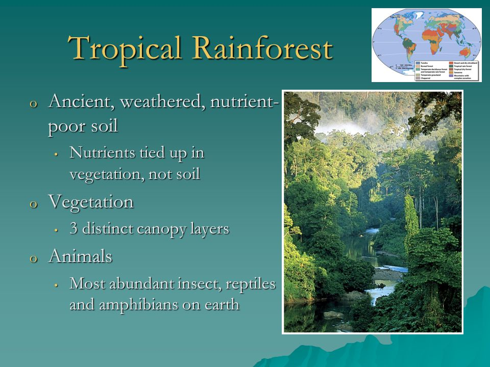 Tropical Rainforest Ancient, weathered, nutrient-poor soil Vegetation