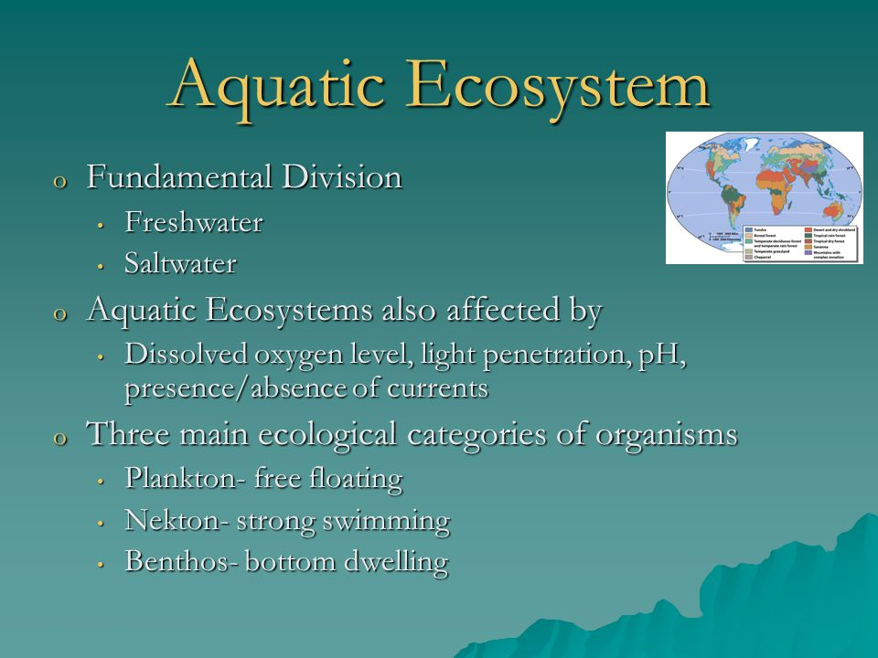 Aquatic Ecosystem Fundamental Division