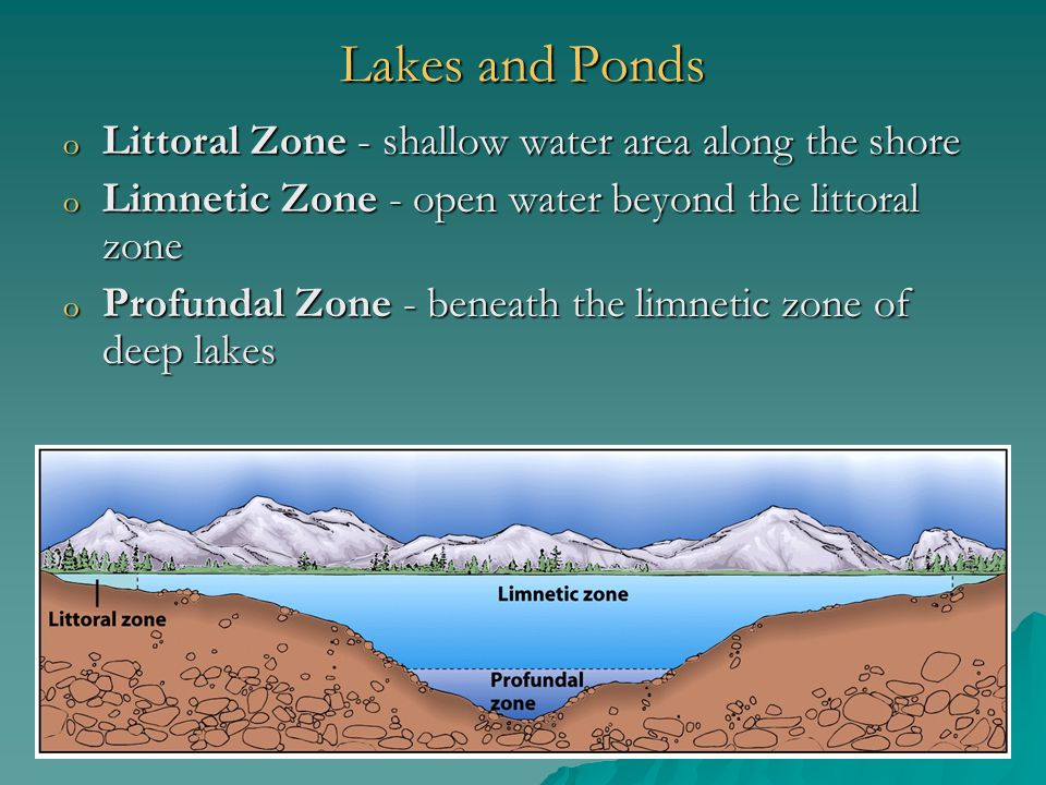 Lakes and Ponds Littoral Zone - shallow water area along the shore