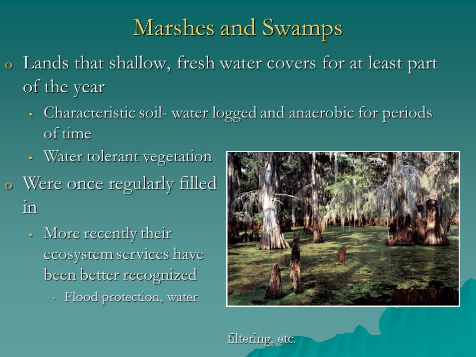 Marshes and Swamps Lands that shallow, fresh water covers for at least part of the year.