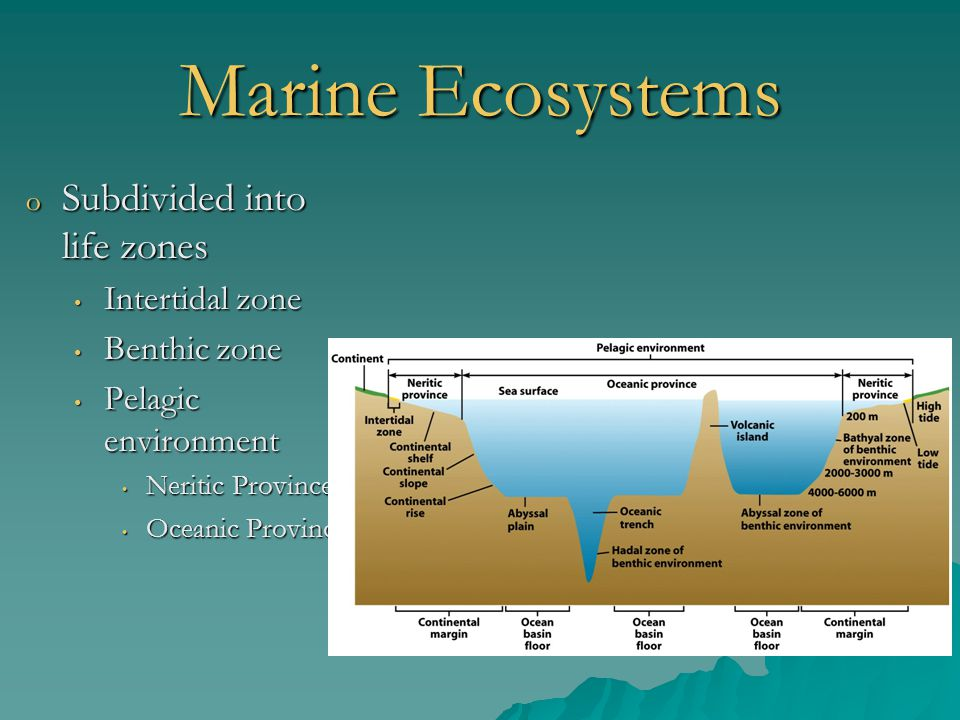 Marine Ecosystems Subdivided into life zones Intertidal zone