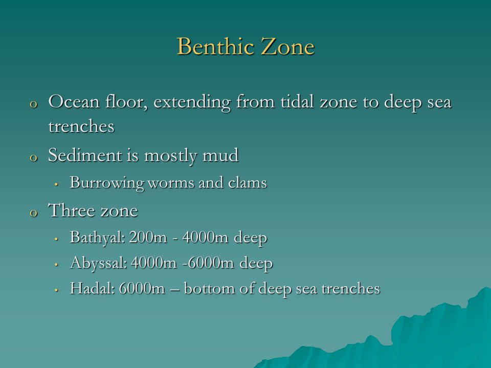 Benthic Zone Ocean floor, extending from tidal zone to deep sea trenches. Sediment is mostly mud. Burrowing worms and clams.