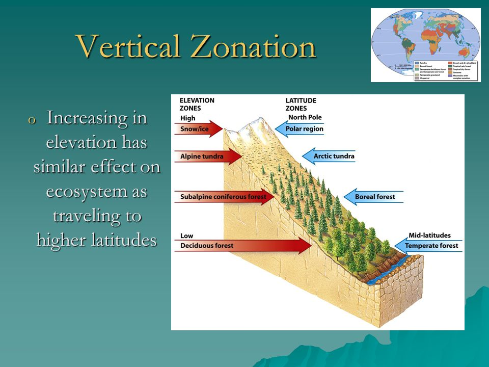 Vertical Zonation Increasing in elevation has similar effect on ecosystem as traveling to higher latitudes.