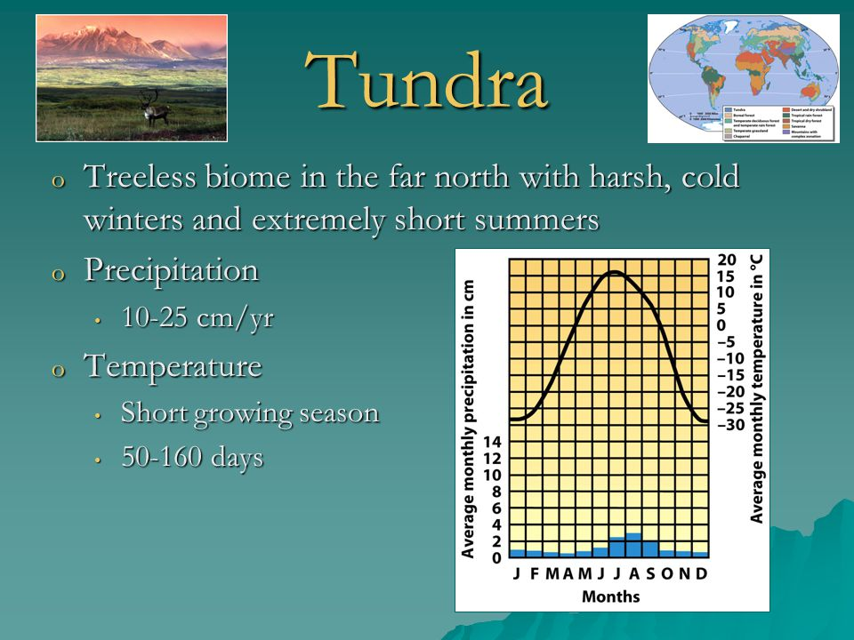 Tundra Treeless biome in the far north with harsh, cold winters and extremely short summers. Precipitation.