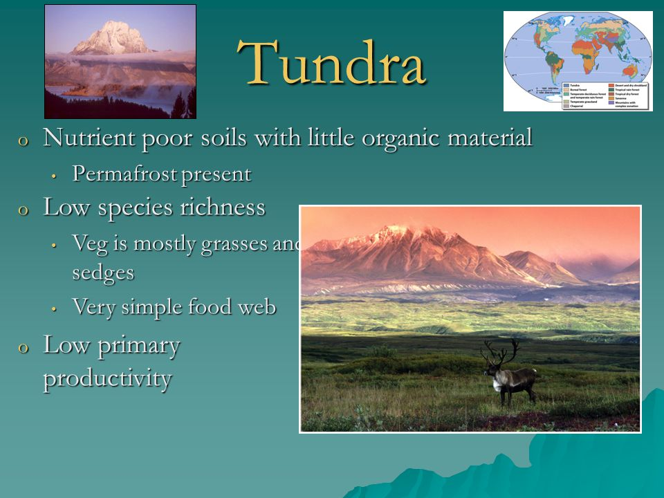 Tundra Nutrient poor soils with little organic material