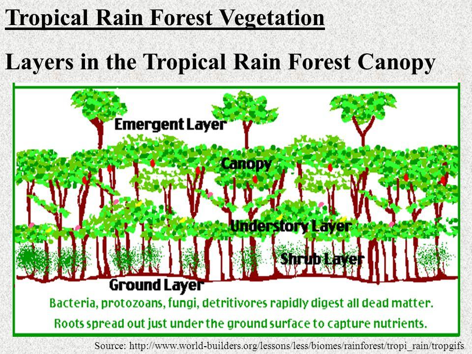 Tropical Rain Forest Vegetation