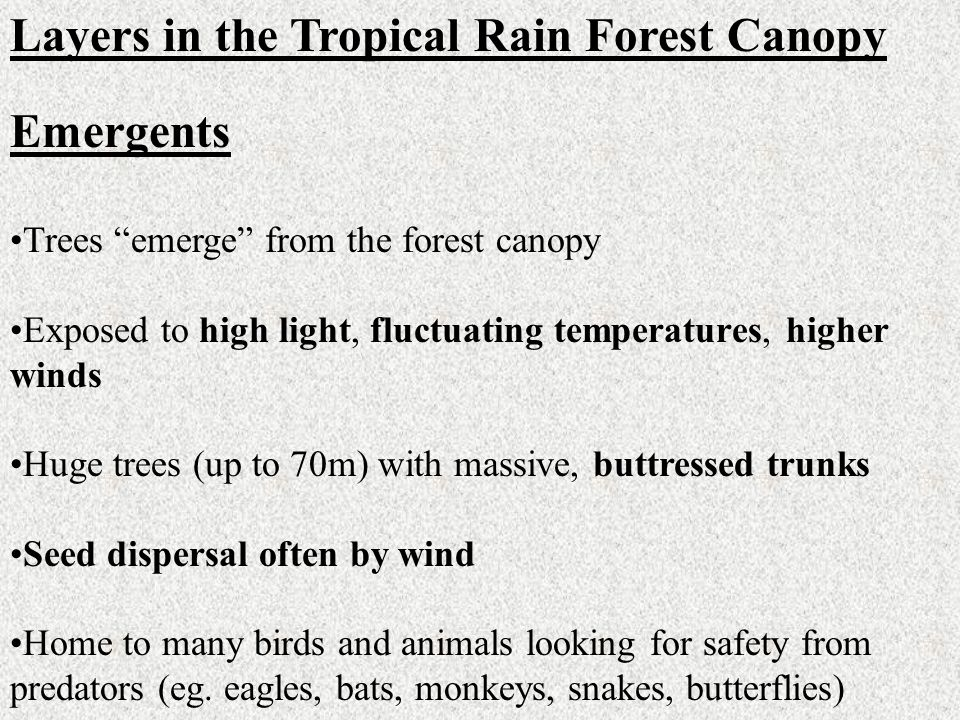 Layers in the Tropical Rain Forest Canopy Emergents