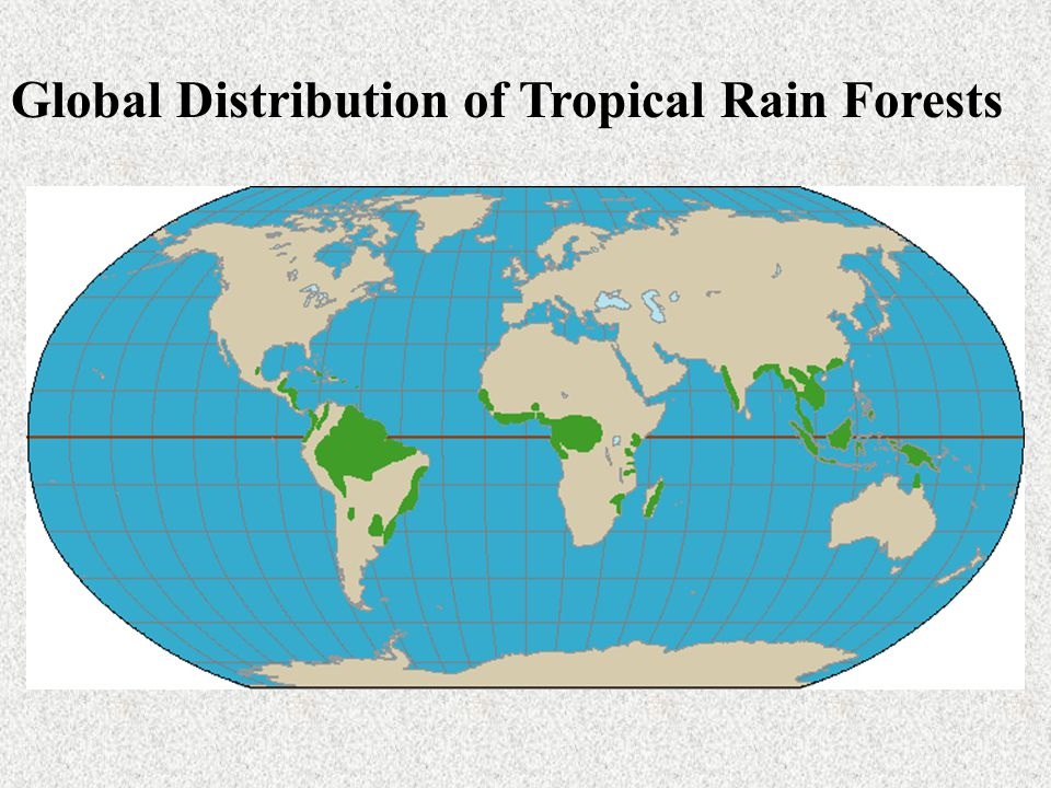 Global Distribution of Tropical Rain Forests