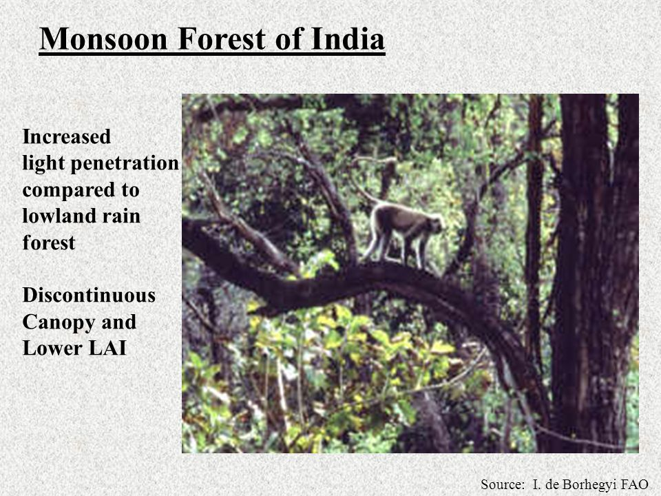 Monsoon Forest of India