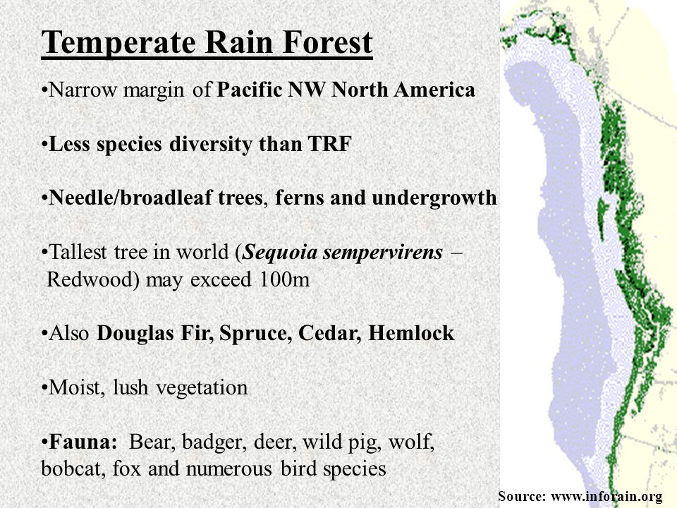 Temperate Rain Forest Narrow margin of Pacific NW North America