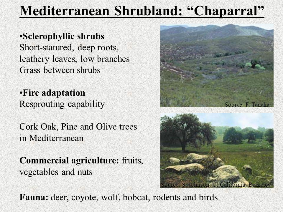 Mediterranean Shrubland: Chaparral