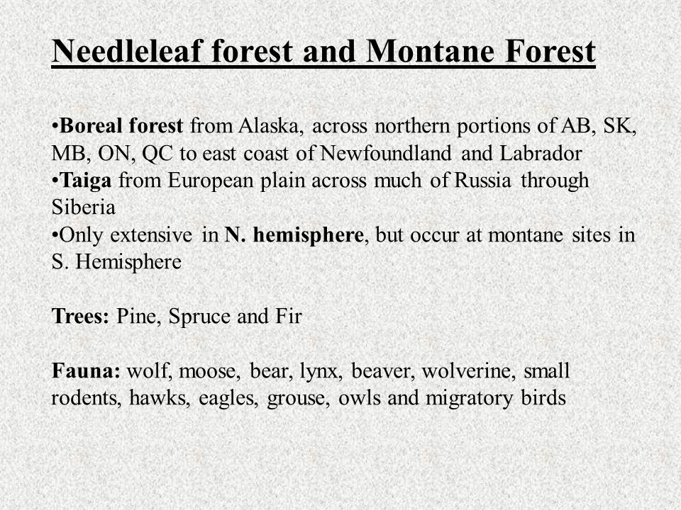 Needleleaf forest and Montane Forest