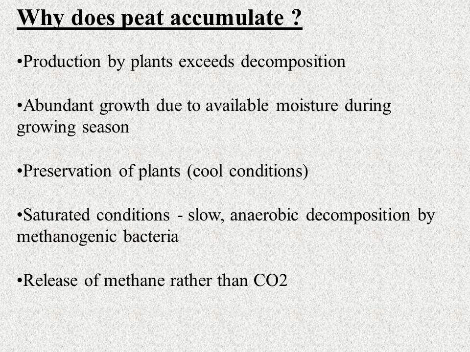 Why does peat accumulate