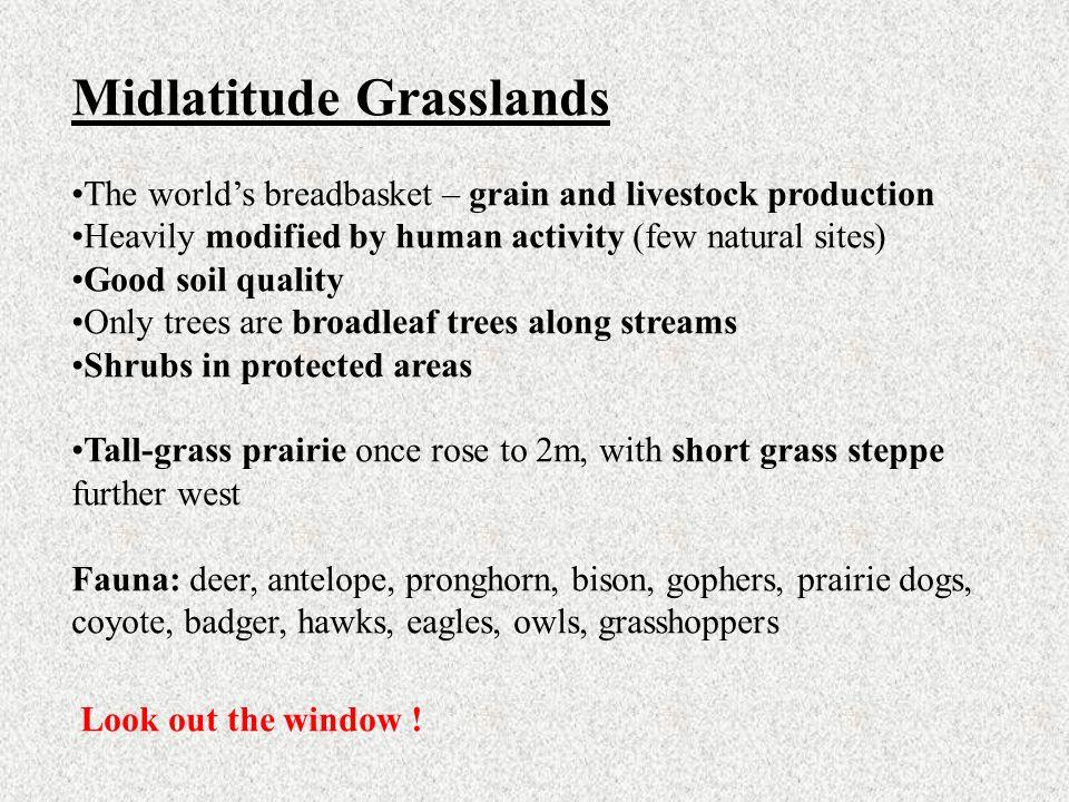 Midlatitude Grasslands